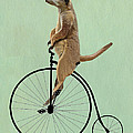 Meerkat On A Black Penny Farthing by Kelly McLaughlan
