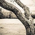 Meet Me Under The Old Apple Tree by Edward Fielding