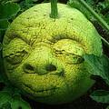 Melon Head by Jack Zulli