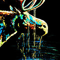 Midnight Moose Drool  by Teshia Art