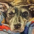 Milo The Lurcher by Pet Portraits by Julie Bunt