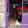 Minding The Shop. Two French Dogs In Boutique by Menega Sabidussi