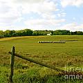 Misty Hills Farm by Addie Hocynec
