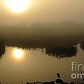 Misty Morning In The Marsh by Nancy Greenland