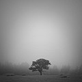 Misty Morning by Patrick Downey