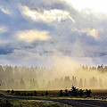 Misty Spring Morning by Annie Pflueger