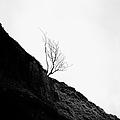Misty Tree Glen Etive by John Farnan