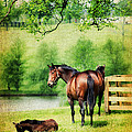 Mom And Foal by Darren Fisher