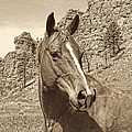 Montana Horse Portrait In Sepia by Jennie Marie Schell