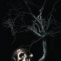 Moonlit Skull And Tree Still Life by Tom Mc Nemar