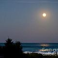 Moonlit Stroll by Michelle Wiarda