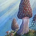 Morel Mushrooms by Mike Stinnett