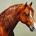 Morgan Horse - Flame by Crista Forest