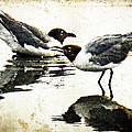 Morning Gulls - Seagull Art By Sharon Cummings by Sharon Cummings