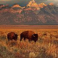 Morning Travels In Grand Teton by Sandra Bronstein