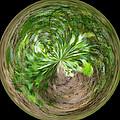 Morphed Art Globe 3 by Rhonda Barrett