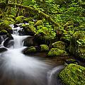 Mossy Arch Cascade by Darren  White