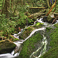 Mossy Creek by Debra and Dave Vanderlaan