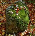 Mossy Rock by Sandra Updyke