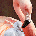Mother And Baby Flamingo by Jane Schnetlage