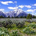 Mount Moran Wildflowers by Brian Harig