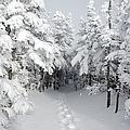 Mount Osceola Trail - White Mountains New Hampshire by Erin Paul Donovan