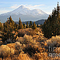 Mount Shasta In The Fall  by Gary Whitton