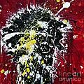 Mr. Nobody by Ismeta Gruenwald