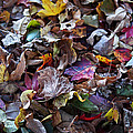 Multicolored Autumn Leaves by Rona Black
