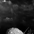 Mushroom by Bob Orsillo