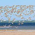 My Tern by Bill Wakeley
