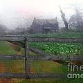 Mystery Farm
