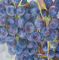 Napa Grapes 1 by Nick Vogel