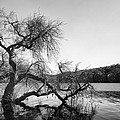 Napa Lake by Francesco Emanuele Carucci