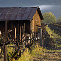Napa Morning by Bill Gallagher