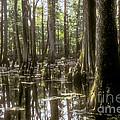 Natchez Trace Wetlands by Bob Phillips