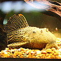 National Zoo - Fish - 011311 by DC Photographer