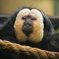 National Zoo - Mammal - 01136 by DC Photographer