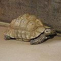 National Zoo - Turtle - 12121 by DC Photographer