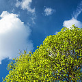 Nature In Spring - Bright Green Tree And Blue Sky by Matthias Hauser