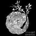 Nature's Choir mono Print by Budi Satria Kwan