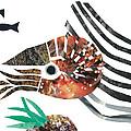 Nautilus by Earl ContehMorgan