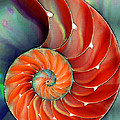 Nautilus Shell - Nature's Perfection by Sharon Cummings