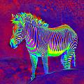 Neon Zebra by Jane Schnetlage