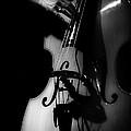 New Orleans Strings by Brenda Bryant