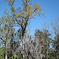 New Orleans - Swamp Boat Ride - 121265 by DC Photographer