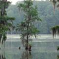 North Florida Cypress Swamp Print by Rich Leighton