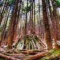 Northwest Old Growth by Spencer McDonald