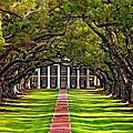 Oak Alley by Steve Harrington