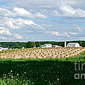 Ohio Amish Farm by Lila Fisher-Wenzel